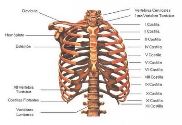 20 partes del cuerpo innecesarias