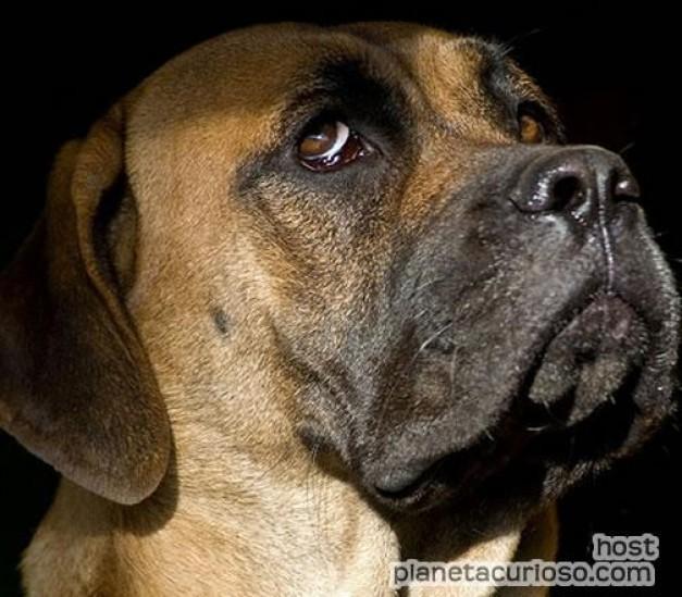 10 perros mas peligrosos: